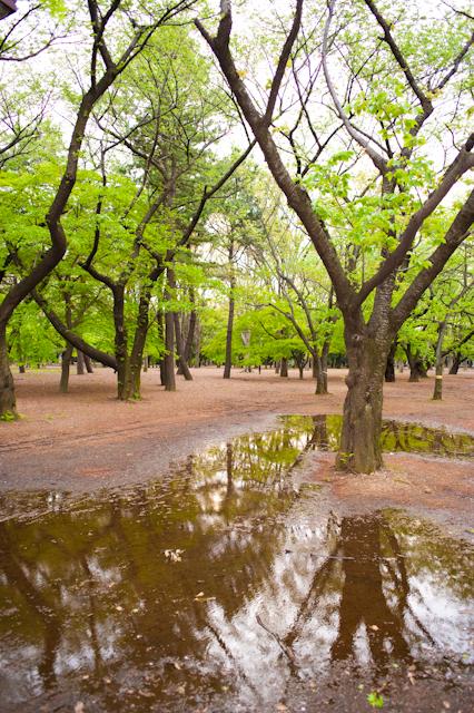 代々木公園F4